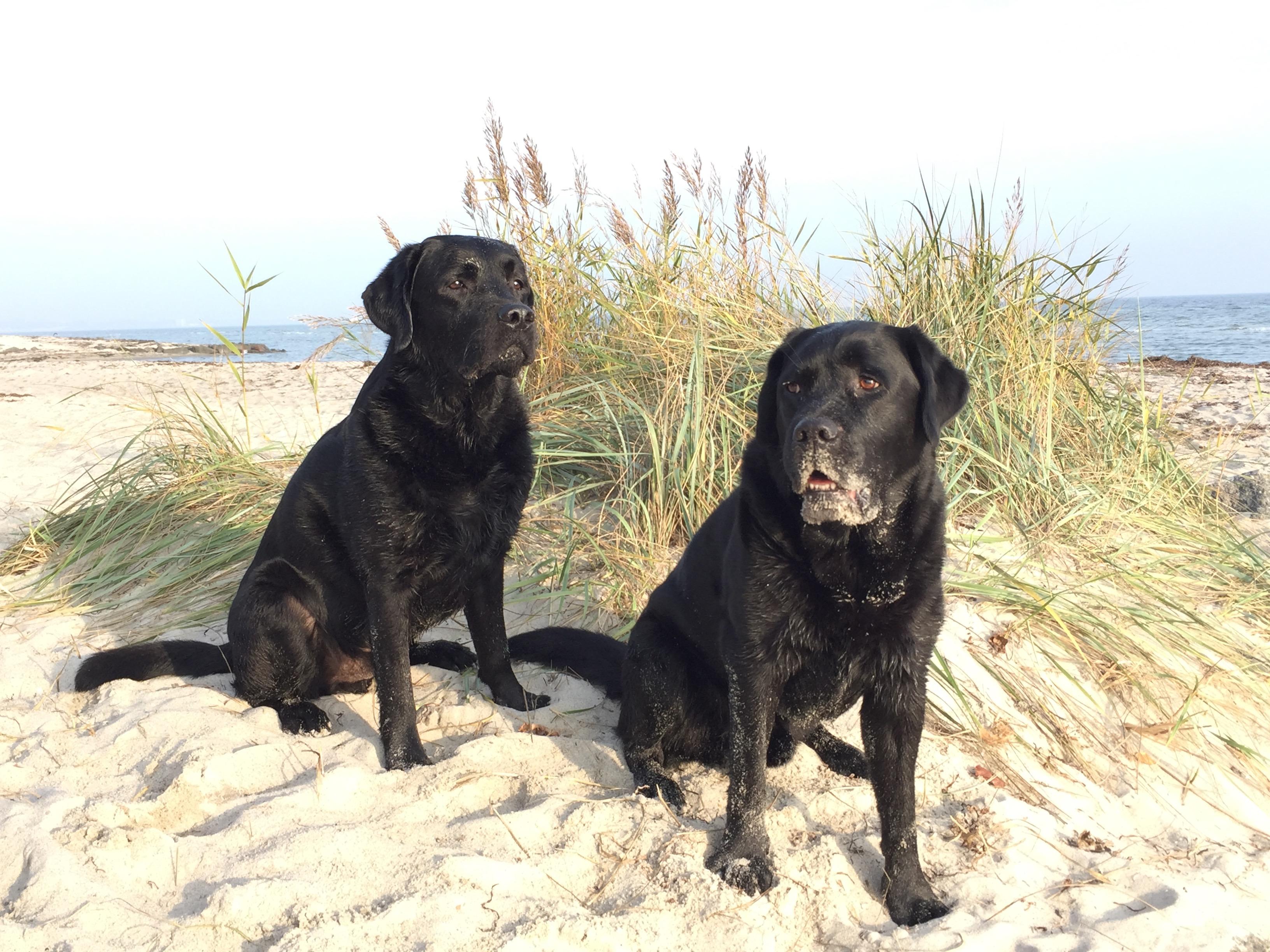 Tucker und Quentin am Strand